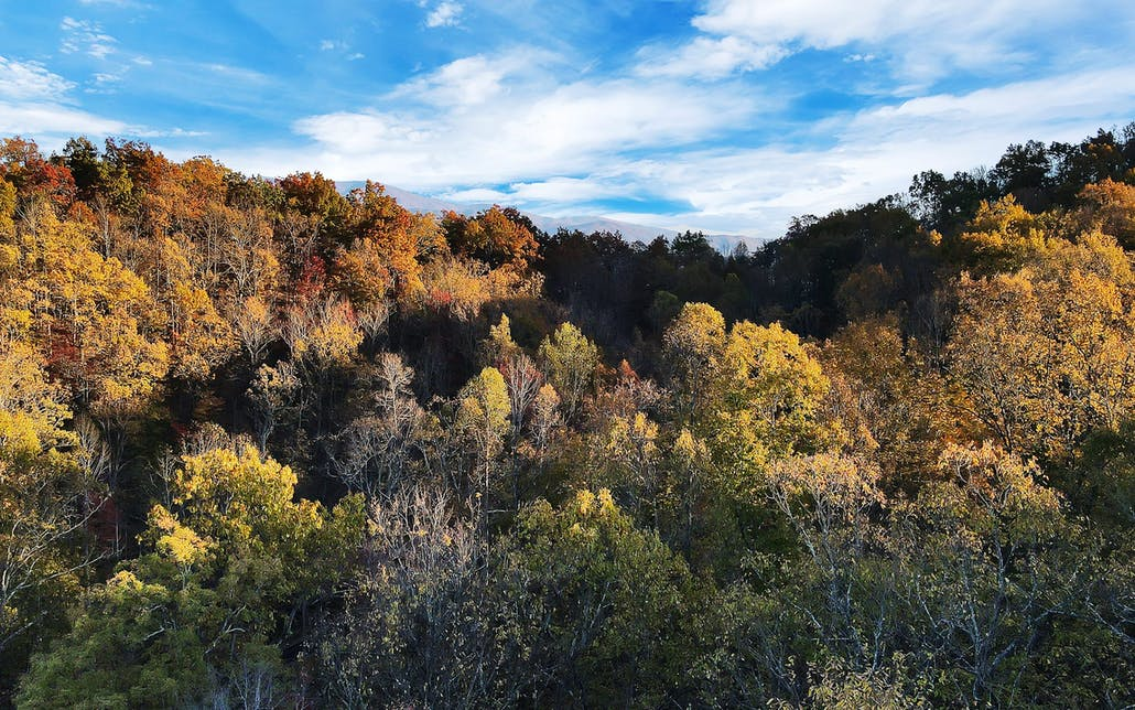 Tract 30r1 Chilhowee Mountain Tr, Maryville, TN 37803 - Photo 4